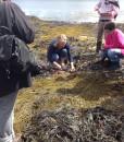 so sligo irish seaweed kitchen 2014 249